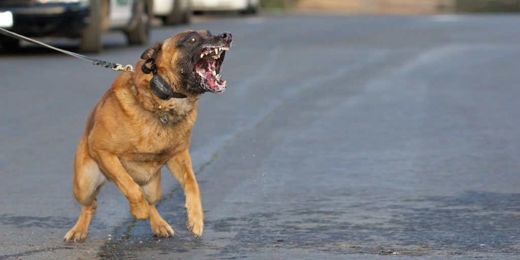 Barking dog ready to attack